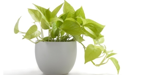 Plant In Home 23 Important Tips To Improve Your Home Vastu While Bringing .