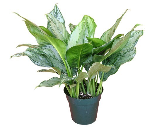 28 best air purifying plants ( for indoor / outdoor ...