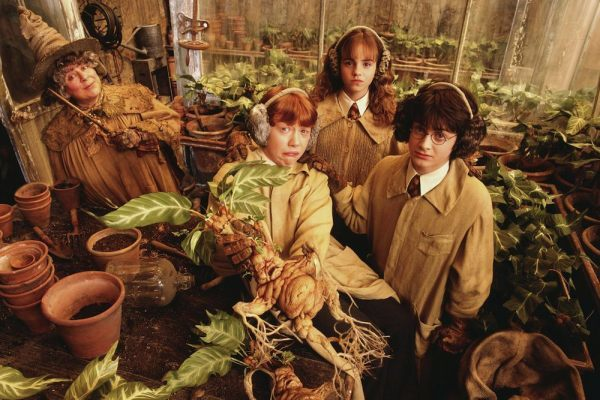 Do U Recognize These Magical Plants From Harry Potter Series