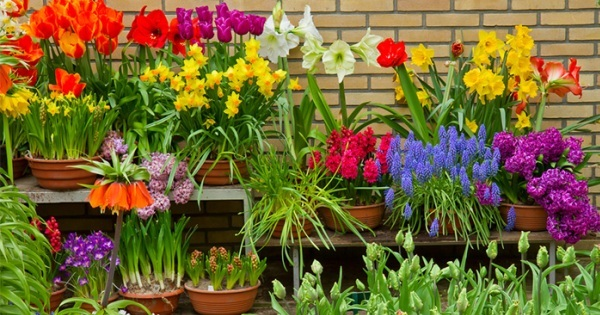 Top Easy Grow Flower Bulbs To Add Color Creativity Adventure - Spring wikipedia