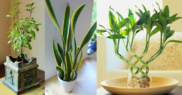 23 important tips to improve your home vastu while bringing plants in plant our culture - Plants can improve ambience home ...