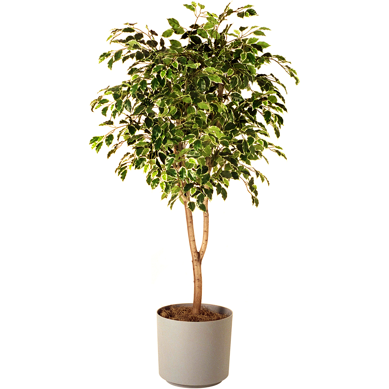 Want To Keep Your House Cool Without An Ac Bring These Plants In Your House Top 10 Plants