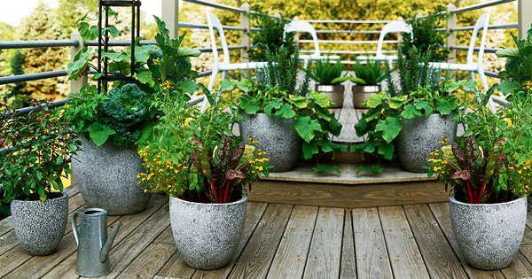 images?q=tbn:ANd9GcQh_l3eQ5xwiPy07kGEXjmjgmBKBRB7H2mRxCGhv1tFWg5c_mWT Ideas For Gardening At Terrace @house2homegoods.net