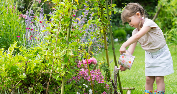 Thirsty plants Top tips for watering your plants in hot weather