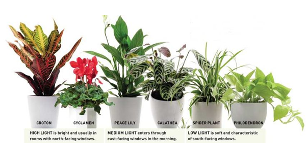 Pleasant This Is Why Peace Lily Is Best House Plant  Plant Talk  With Luxury This Is Why Peace Lily Is Best House Plant With Delightful London Garden Also Pubs With Gardens Near Me In Addition Jaeger Covent Garden And Marle Place Gardens As Well As Valleyside Garden Centre Additionally Secret Garden Publishing From Wikinurserylivecom With   Luxury This Is Why Peace Lily Is Best House Plant  Plant Talk  With Delightful This Is Why Peace Lily Is Best House Plant And Pleasant London Garden Also Pubs With Gardens Near Me In Addition Jaeger Covent Garden From Wikinurserylivecom