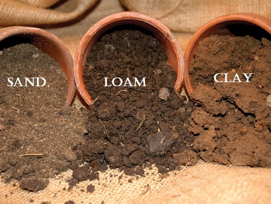 Which Soil is Best for Plant Growth? - Garden Talk