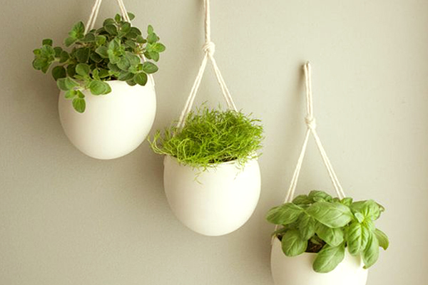 These indoor house plants detoxify and cool your home garden talk nurserylive wikipedia - Cool looking house plants ...