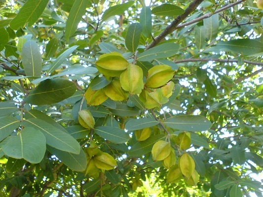 Nakshtra plants–significance of these to sustain human life