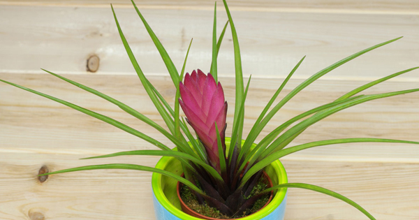5 Indoor Plants That Will Absorb Humidity in Your House