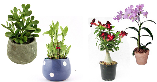how to use indoor plants wisely for tabletops at home and office
