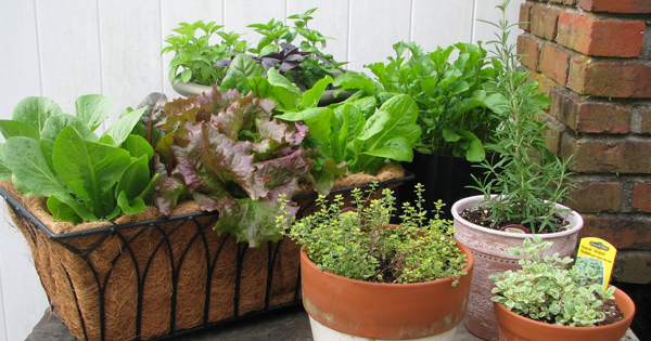 Want To Set Up Kitchen Garden On Your Terrace ? Check This ...
