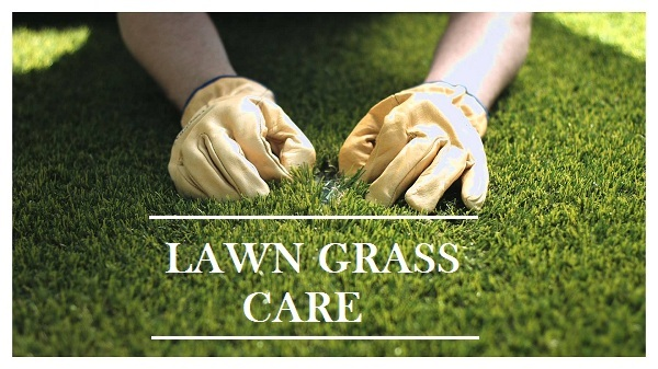 How to Start a LAWN - Check These Growth and Care Tips - Garden Talk