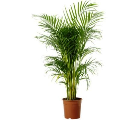 detail grow care buy above plant browse all indoor plants best office plants no sunlight