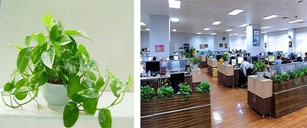 Top 7 Plants that Absorb Radiation from Computer & Mobile