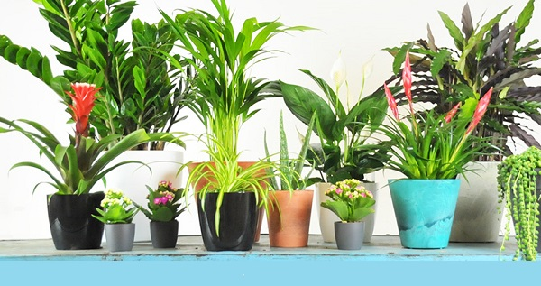 28 Best Air Purifying Plants For Indoor Outdoor Clified To Nasa
