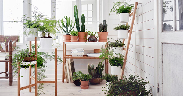 View Details Indoor Plants Browse All Low Maintenance