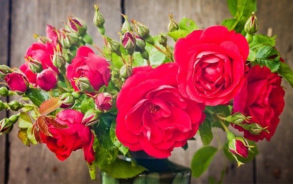 so the selection of best fragrant roses can be a difficult job never mind here the list of 10 intensely fragrant roses to plant in your garden - Fragrant Roses