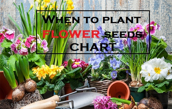 When to Plant Flower Seeds - Flower Planting Calender