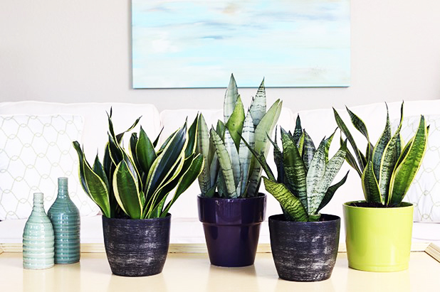 Want to feel freshness & creative Keep Top 10 plants on