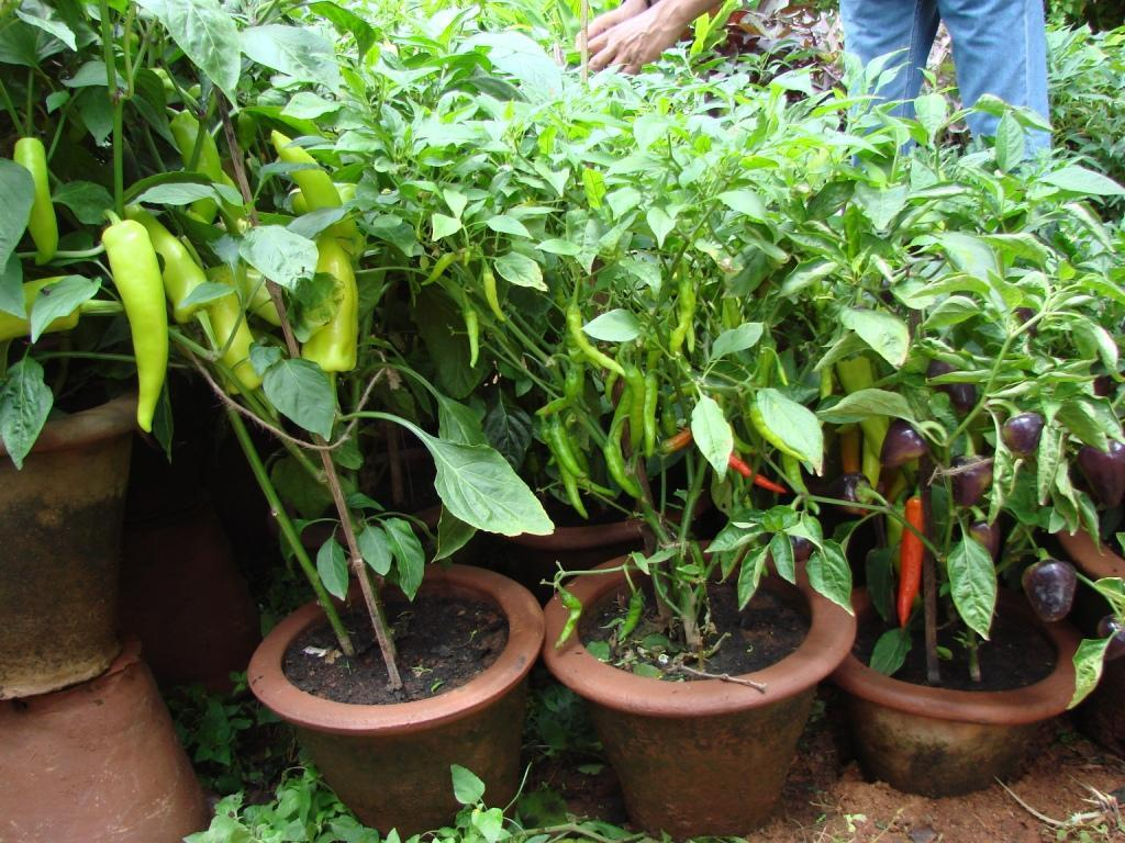 Plants For Kitchen Garden Who Says A Kitchen Garden Cant Be Beautiful Garden Talk