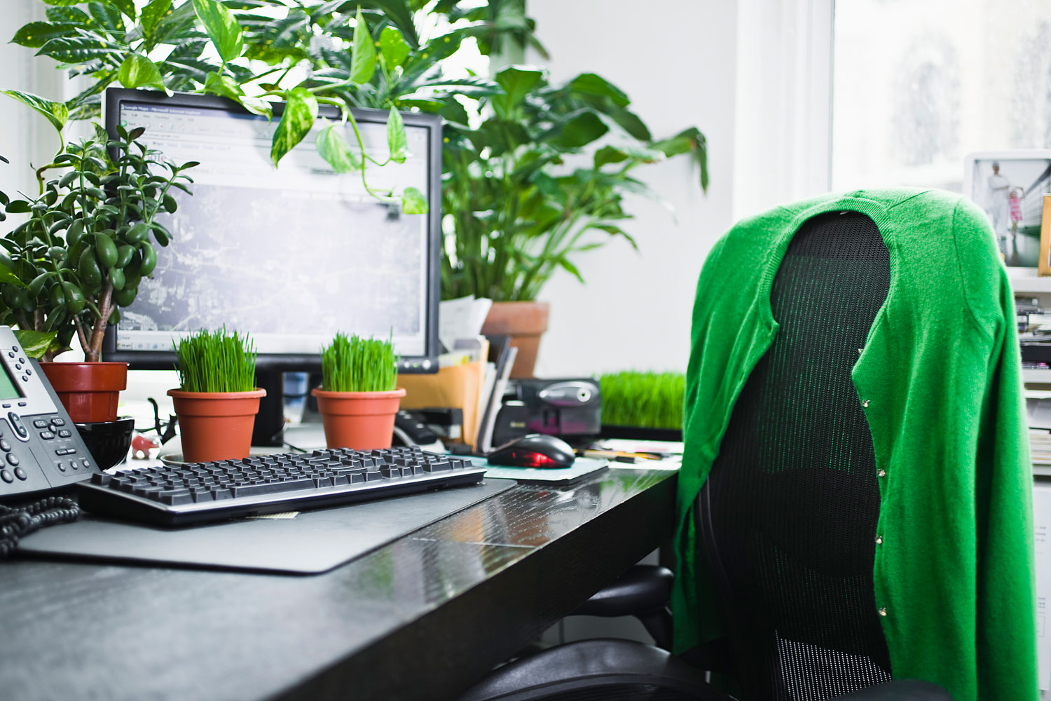 Create an inspiring work-space office for yourself - Plant Talk -  NurseryLive Wikipedia