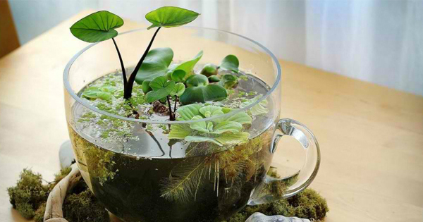 indoor plants that grow in water garden talk. Black Bedroom Furniture Sets. Home Design Ideas