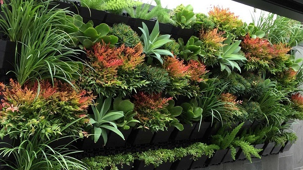 Top 10 Plants For Vertical Garden Top 10 Plants Nurserylive