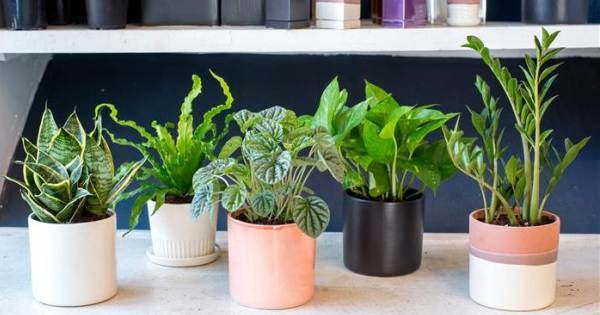 28 best air purifying plants ( for indoor / outdoor ... House Plant Nasa Study on army study, sally ride study, facebook study,