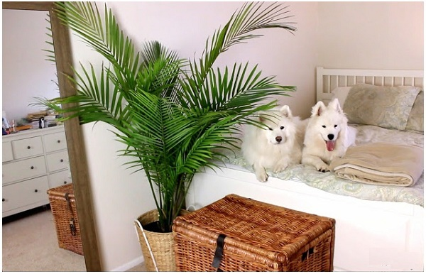 These plants are pets-friendly - Plant Talk - NurseryLive