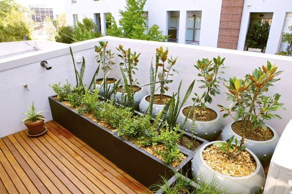 All The Plants In Your Terrace Garden Will Create A Micro Climate And Help  To Lower The Temperature Of Your Home.