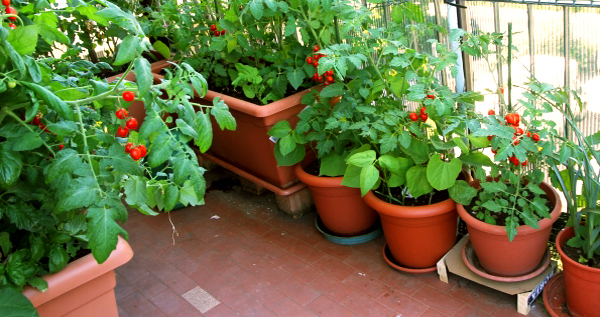 How To Select Vegetables For Rooftop Gardening Garden Talk