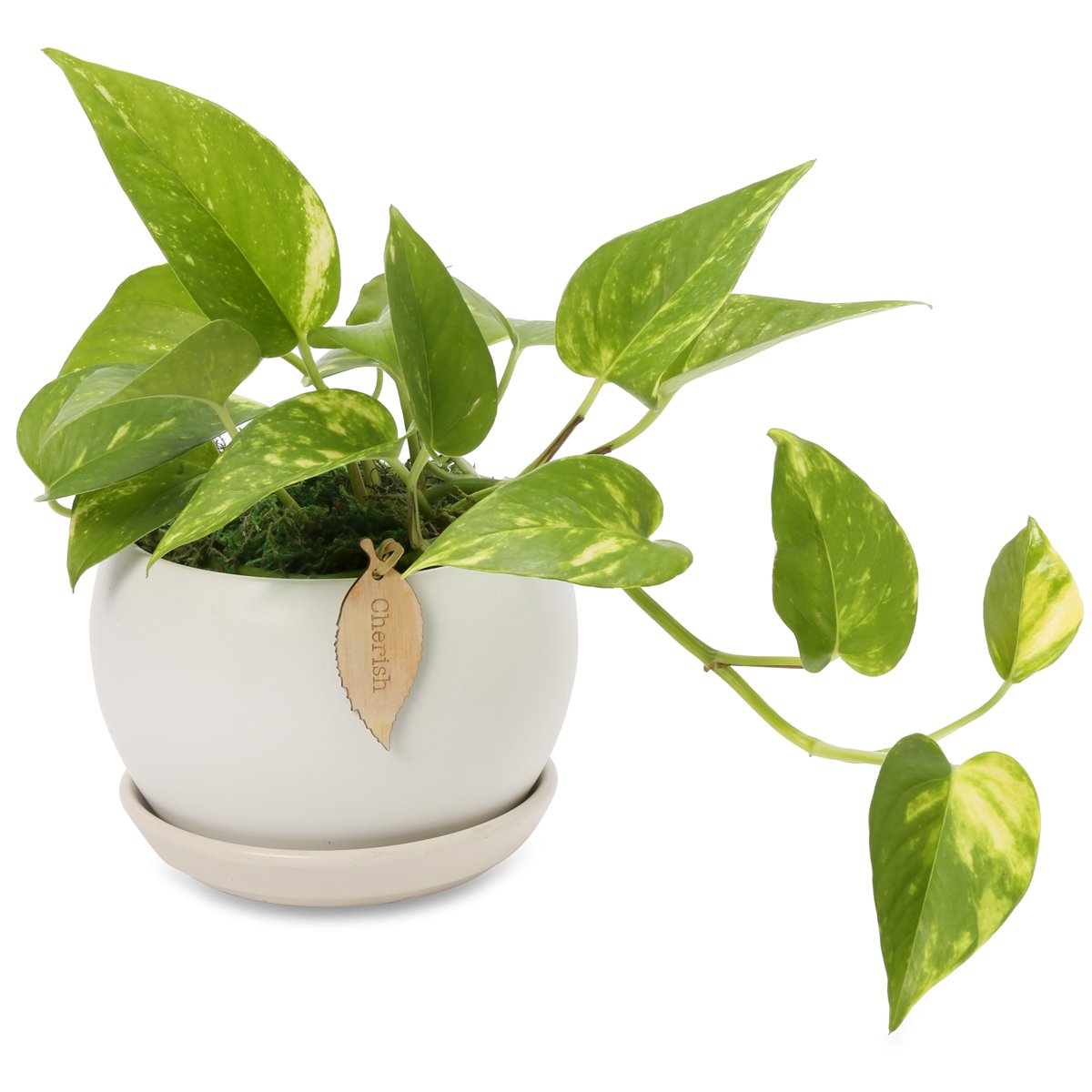17-air-purifying-plants-Devils-ivy