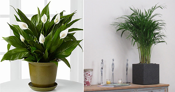 These 5 plants are best for Living Room....! - Top 10 Plants ...