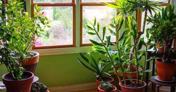 Want To Keep Your House Cool Without An Ac Bring These Plants In
