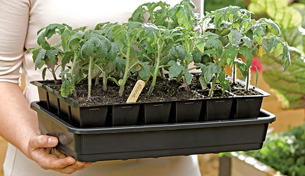 Guide To Growing Vegetables And Flowers From Seed Plant