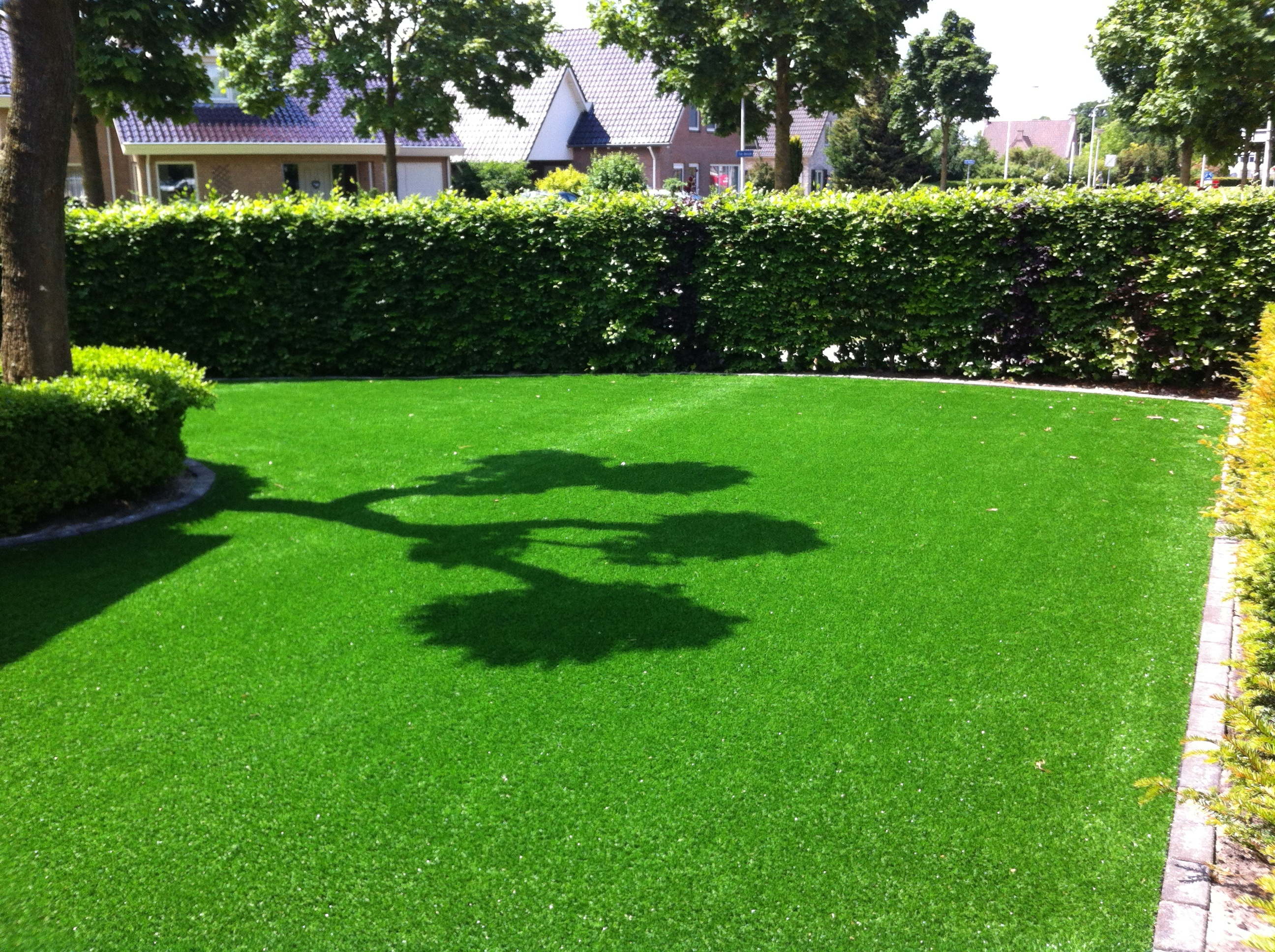 Best way to plant grass seed - Buy Grass Plant Buy Grass Seeds Today Offer