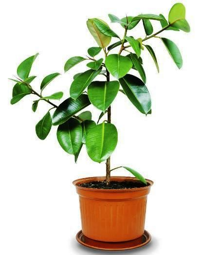 10 best houseplants to de stress your home and purify the - Healthiest houseplants fresh air delight ...