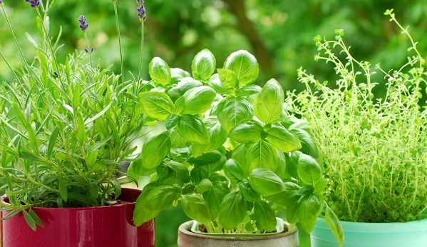 Natural Pest Control Plants To Must Have In Your Garden Garden