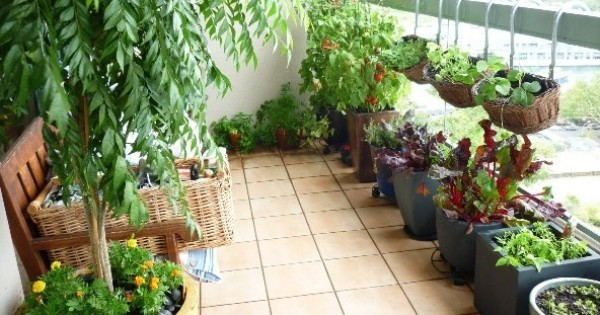 Did You Know These Vegetables Can Be Grown In Shade Also? Garden Talk Part 72