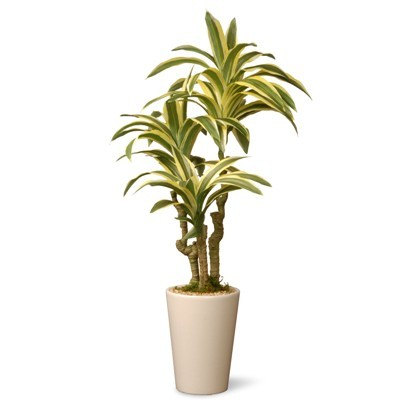 Detail Grow Care Above Plant Browse All Indoor Plants