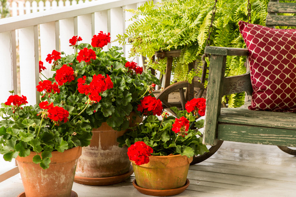 Fragrant Plants that repel mosquitoes naturally     ! - Natural