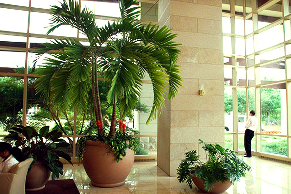 These Indoor House Plants Detoxify And Cool Your Home Garden Talk Nurserylive Wikipedia