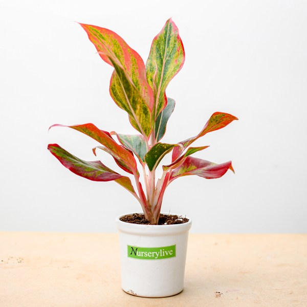 air-purifier-plant