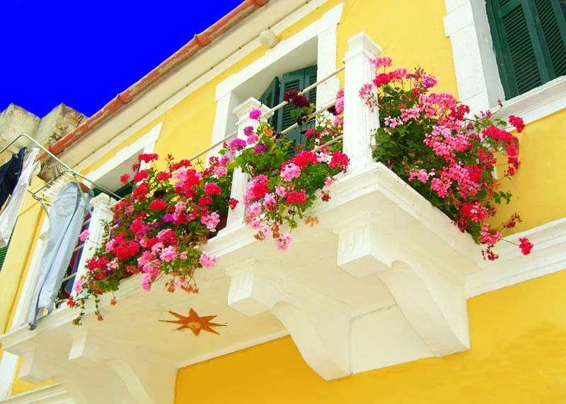Top ideas to decorate your balcony garden with creepers - Flowers for apartment balcony ...