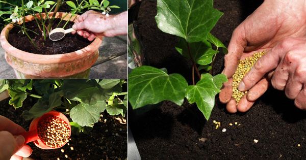 Are you giving right nutrition to your plant ? Check this guide for plant  fertilizers - Garden Talk - NurseryLive Wikipedia
