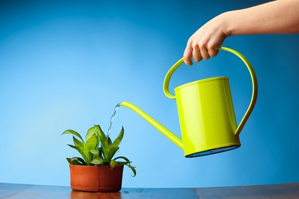 When Should I Water My Plants