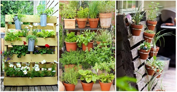 Vertical Gardening Ideas You Would Love To Have In Your Home