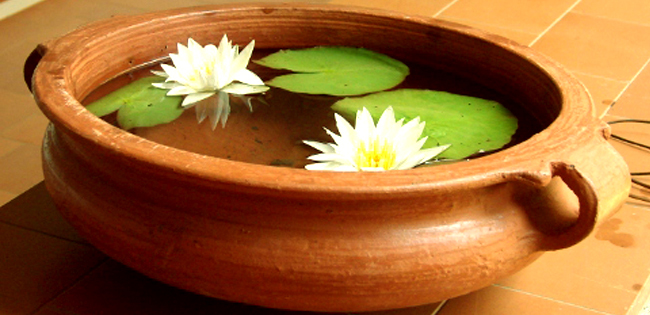 Bring Knowledge Prosperity By Keeping Lotus Plant At Home Plant