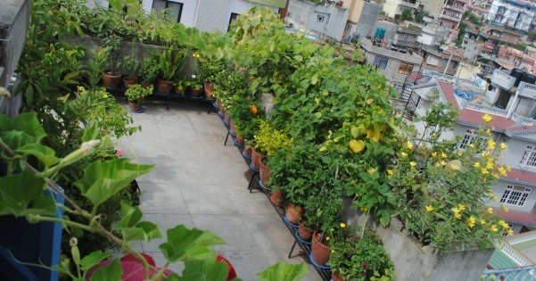 Planning for vegetable gardening check these terrace for Terrace vegetable garden by harikumar