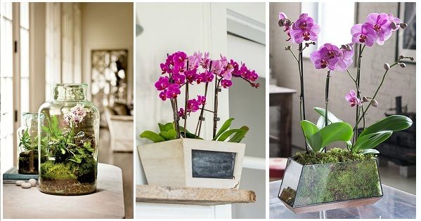 6 Beautiful Orchid Arrangement Ideas You Will Like